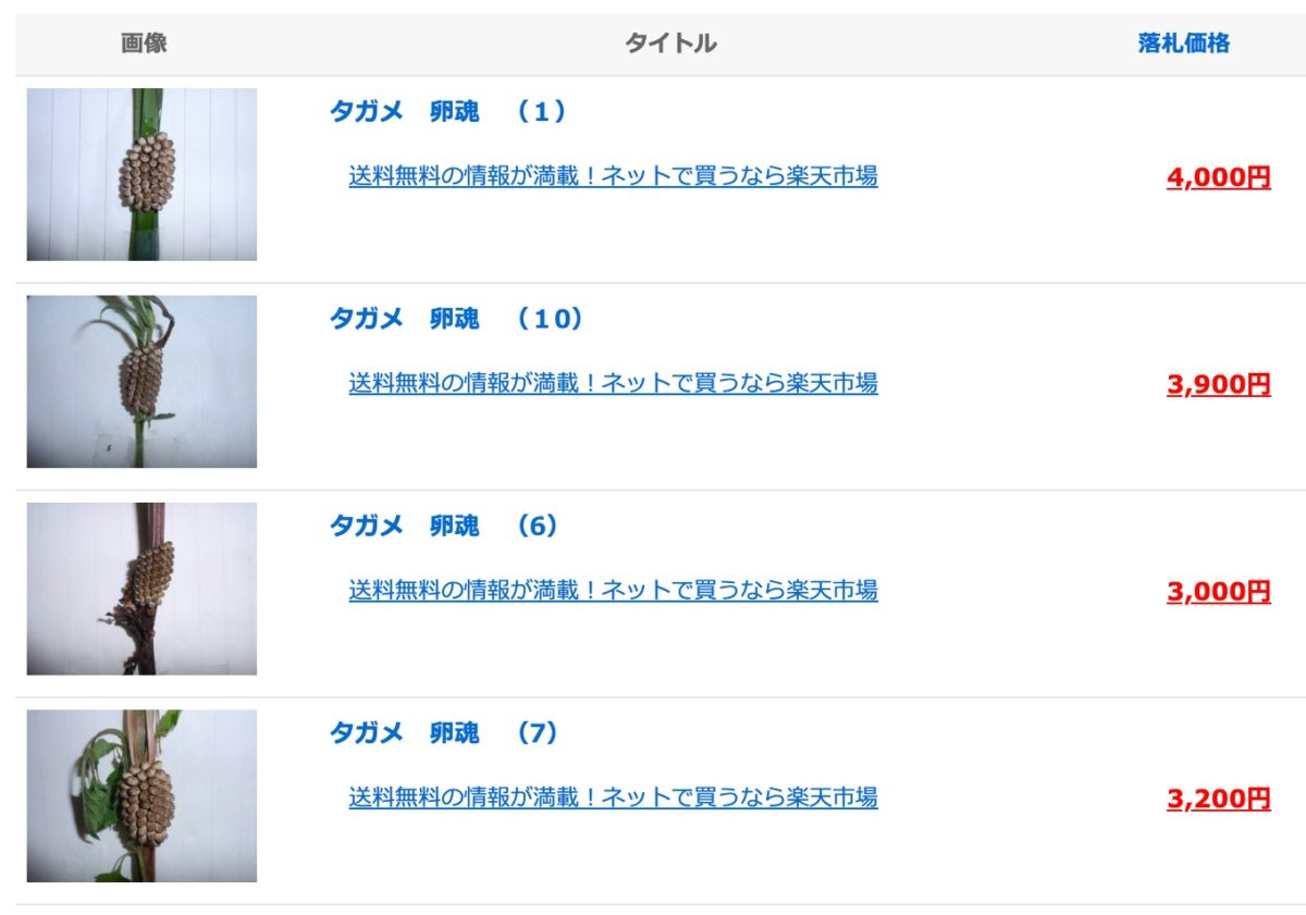 タガメ_卵の2019年02月から2020年01月の、オークション落札価格一覧__オークフリー