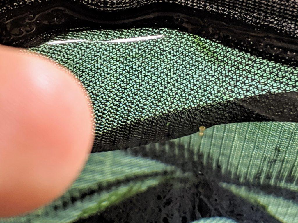 メダカ稚魚(針子)のサイズ