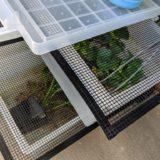 ゲンゴロウ屋外飼育環境