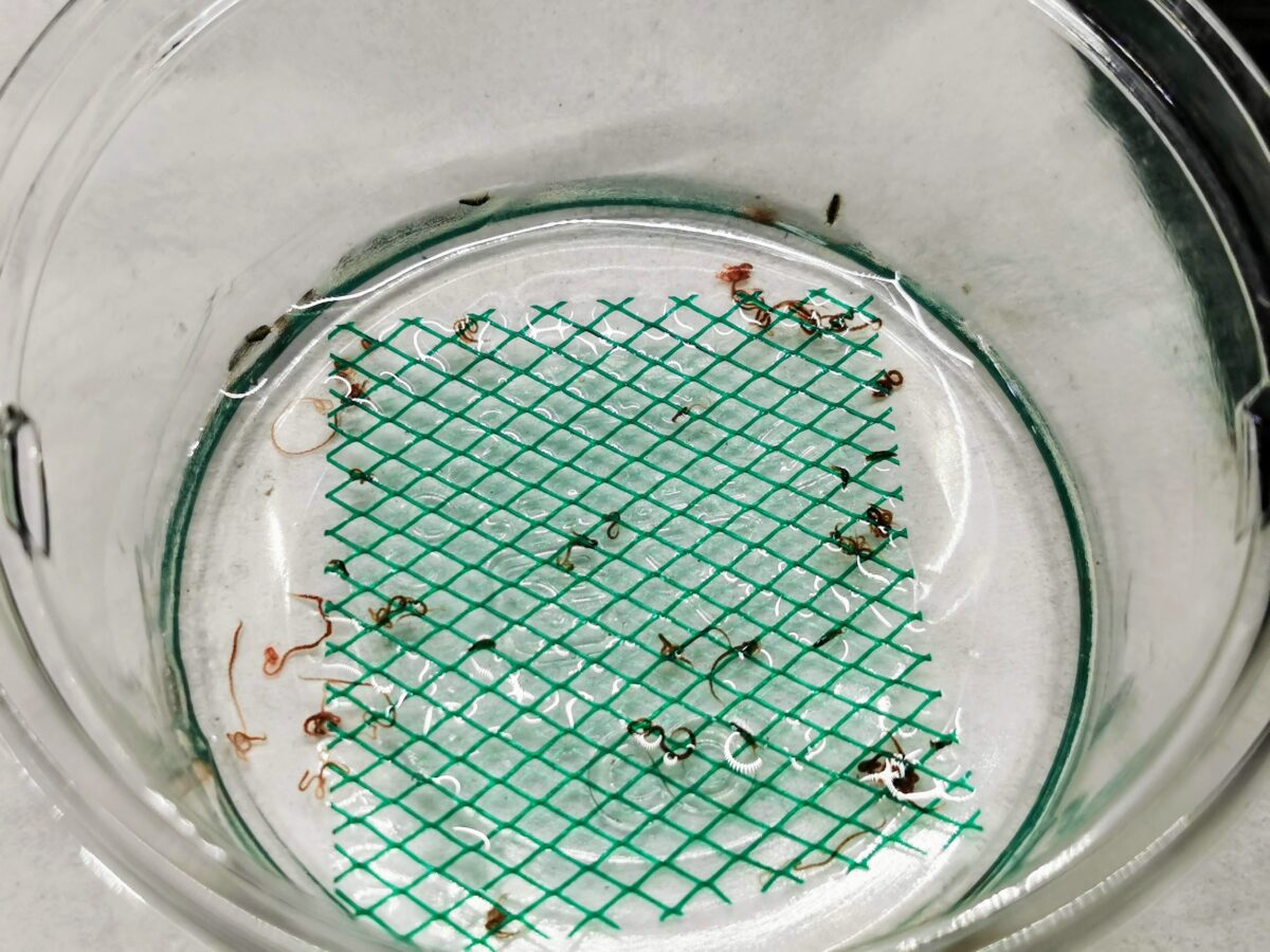 タマガムシ幼虫飼育環境