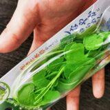 タガメ幼虫飼育につかう人工水草は何がよいか