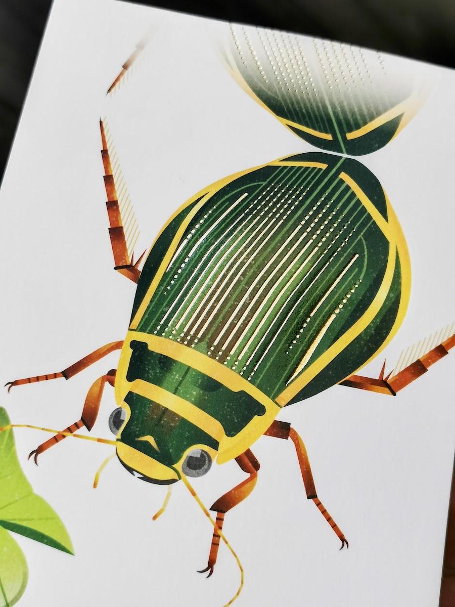 オウサマゲンゴロウモドキのポスターカード