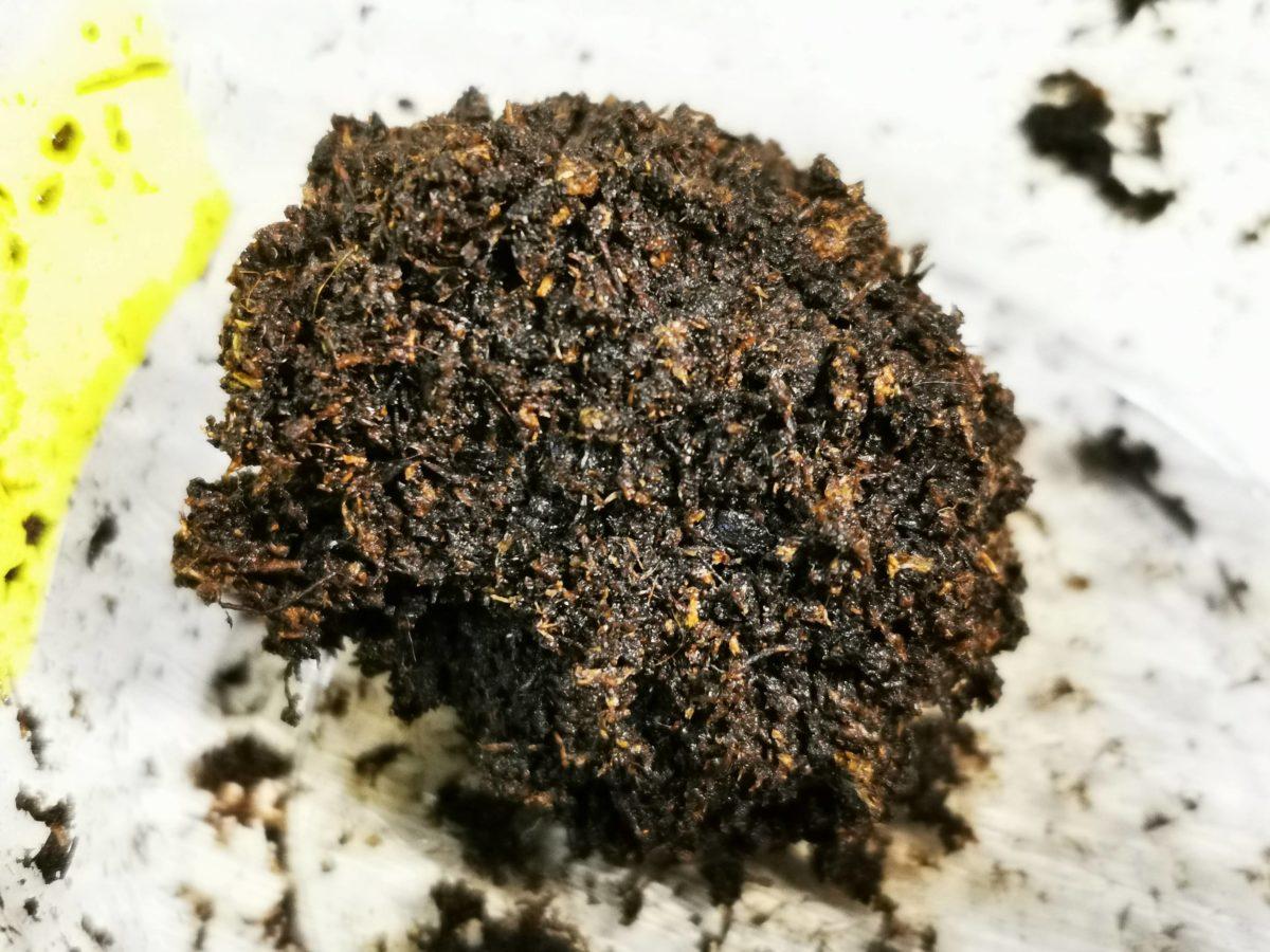 ゲンゴロウの蛹室