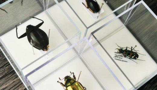 渋谷「博物バザール」で蝶の博物画やプラチナコガネ・ミズスマシ・オウサマゲンゴロウモドキの切手を購入