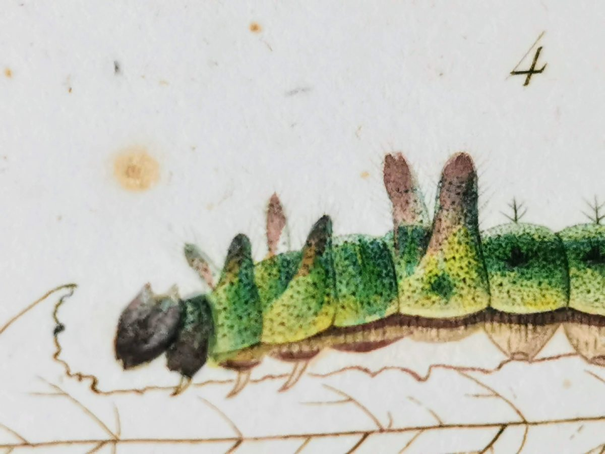 芋虫の描写