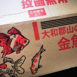 通販で餌用の金魚・ドジョウ・メダカを購入する方法