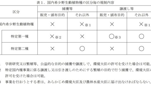 【FAQ】売買・飼育禁止?!タガメの規制で何が許され何が禁止されるか?